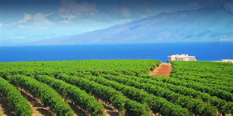 Discover a selection of 159 vacation rentals in coffees of hawaii plantation store, hoolehua that are perfect for your trip. Ka'anapali Coffee Farms - Real Estate Lots in Maui, Hawaii