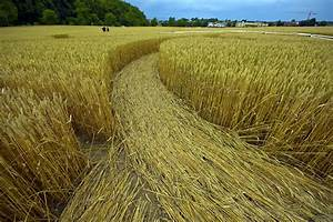 Crop Circles, Still a Mystery to this Day - Monatomic Orme