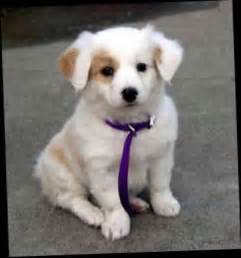 Best Small Breed Dogs with Kids