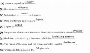 Ncert Solutions Class 12 Biology Chapter 3  Human Reproduction