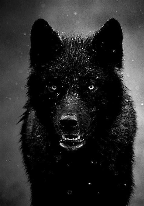 alpha wolf wolf quotes bob marley quotes quotes
