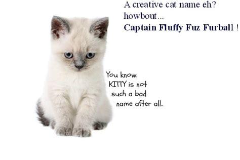 common cat names naming cats unique unisex female male