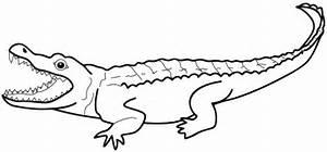 7 Dessins De Coloriage Alligator Imprimer