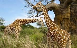 Safari Animal Wallpaper - WallpaperSafari