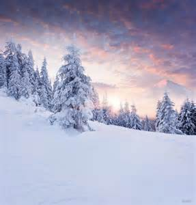3 39 wx5 39 h hot sale vinyl winter photography backdrops