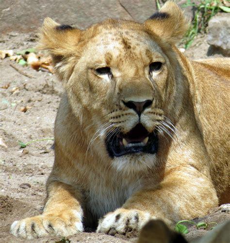 Free Images  Nature, Adventure, Animal, Wildlife, Zoo