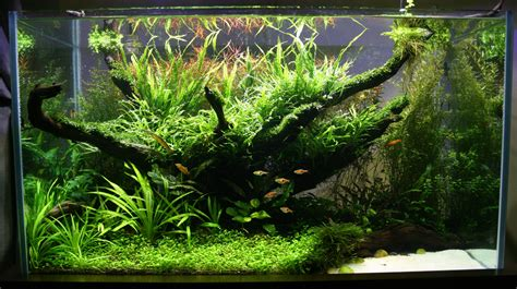 The Best Aquascape by Best Aquascape Sambhav Sankar Invertebrates By Msjinkzd