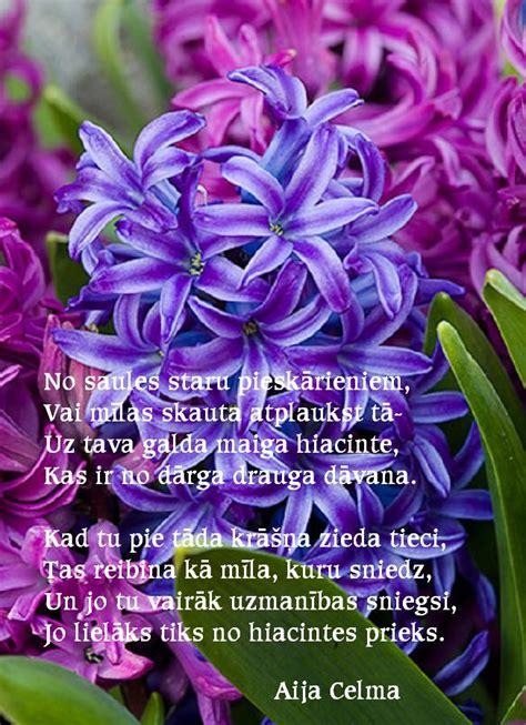 Aijassmaids - dzeja katrai gaumei...: HIACINTE