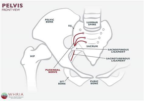Hypertonic Pelvic Floor Symptoms by M 225 S De 1000 Ideas Sobre Levator Ani En Puntos