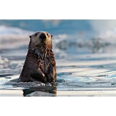 24 best Alaska Framed Photography images on Pinterest