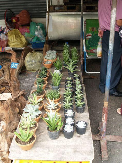 Cactus Lover: JJ market - biggest outdoor plant market