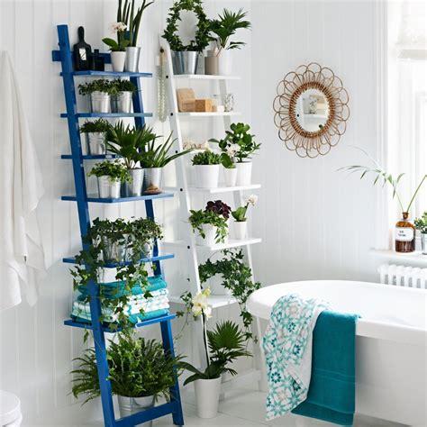 quelles plantes pour une salle de bains