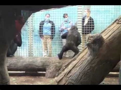 animals telling deez nuts jokes youtube