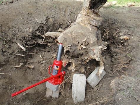 How To Remove Tree Stumps And Roots Safely And Easily Quora