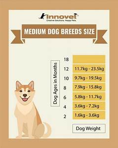 Chihuahua Weight Chart Growth Puppy Growth Chart By Month Breed Size With Faq All