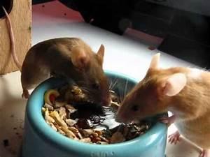 Fressen Igel Mäuse : m use beim fressen youtube ~ Orissabook.com Haus und Dekorationen
