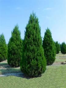 Hunter Christmas Tree Farm