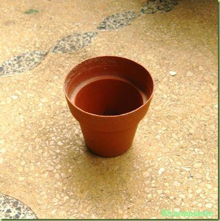vasi in plastica per vivai quali vasi comprare per le piante grasse