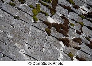 Eternit Asbest Erkennen : asbest eternit dach altes verwahrlost h lle dach verschimmelt eternit ~ Orissabook.com Haus und Dekorationen