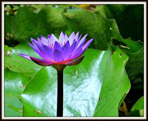 treknature lotus photo