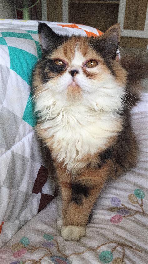 น้องแมวมีขี้ตาแล้วก็เป็นน้ำแฉะๆบริเวณตาและมีกลิ่นเหม็นจะเป็นอะไรไหมคะ