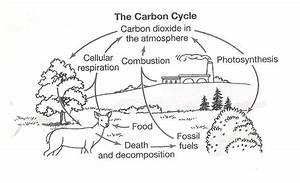 Blank Nitrogen Cycle Diagram Water