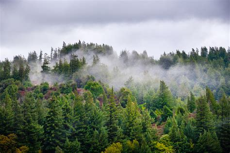 drought slows growth douglas fir trees west