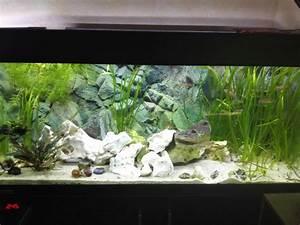 Aquarium Einrichten 60l : der richtige bodengrund aquarienbastelei tanganjika ~ Michelbontemps.com Haus und Dekorationen