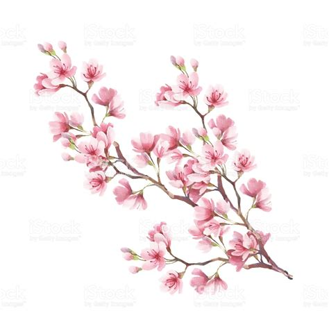 Drawn Sakura Blossom Illustration 3061823 Free Drawn