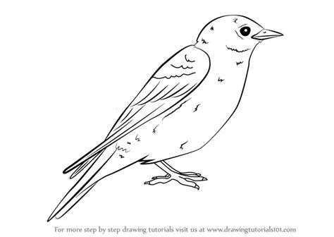 learn   draw  eastern bluebird birds step  step