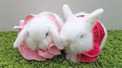 Bunny Bunnies Rabbit Wallpapers Kiss Animals Rabbits