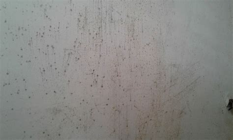 How To Remove Ceiling Mold (with Pictures) Wikihow