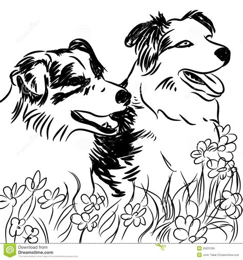 border collie dogs  flower field royalty  stock photo image