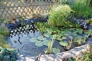 Wasserpflanzen Teich Kaufen : wasserpflanzen seerosen kaliebes blumenhaus ~ Michelbontemps.com Haus und Dekorationen