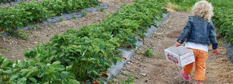 cuisine uip ik finger lakes u farms your own fruits and