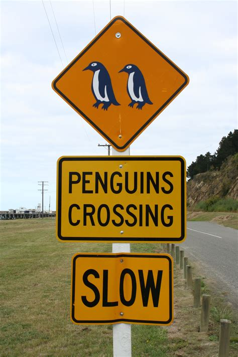 Fileroad Sign Penguins Crossing Nzg  Wikimedia Commons. Windows Server 2012 Hosting Ant Vs Termite. Storage Units In Littleton Co. Banks In Ocean Springs Ms Taxi Driver Quotes. Scope Of Quality Management System. Los Angeles Divorce Attorneys. Zero Interest Car Deals Alcohol Detox Programs. Business Credit Application Template. Lockaway Storage Austin Va Funding Fee Refund