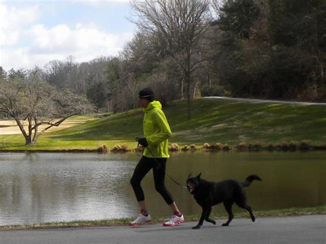 Dogs Have Humans on the Lead in a New Sport - Camicross ...