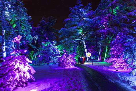 morton arboretums    kind lights wonderland returns