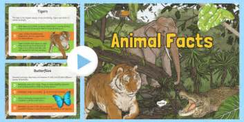 animal facts powerpoint animals animal facts facts