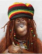 monkey-tribal-funny-monkey-pictures-05 jpg  Funny Monkeys Smoking