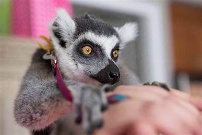 Exotic Toronto Animal Animals Problem Consultation Launches