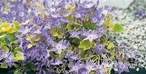 Piante Per Interni Resistenti: Piante da interni: le 6 piante fiorite più belle e facili Le 5