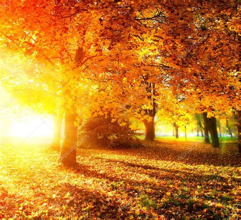 Fall. Autumnal Park. Autumn Trees And Leaves In Sunlight