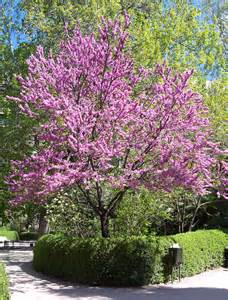 Images Front Yard Landscaping