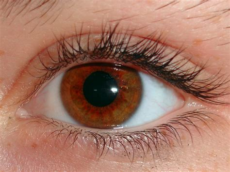 lights in eye why optometrists dilate your