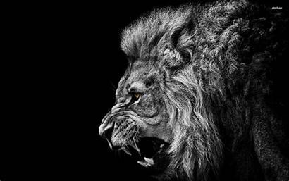 Lion Desktop Backgrounds Wallpapers Phone