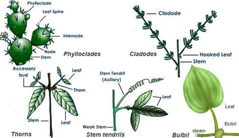 notes  stem grade  biology angiosperm kullabscom
