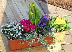 Winterharte Blumen Für Kübel : ganzj hrige balkonpflanzen winterhart im k bel balkonkasten ~ A.2002-acura-tl-radio.info Haus und Dekorationen