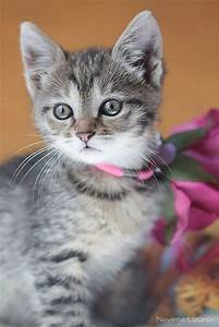 25+ best ideas about Grey tabby kittens on Pinterest ...