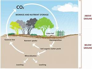 Pin Grassland Ecosystem Diagram on Pinterest